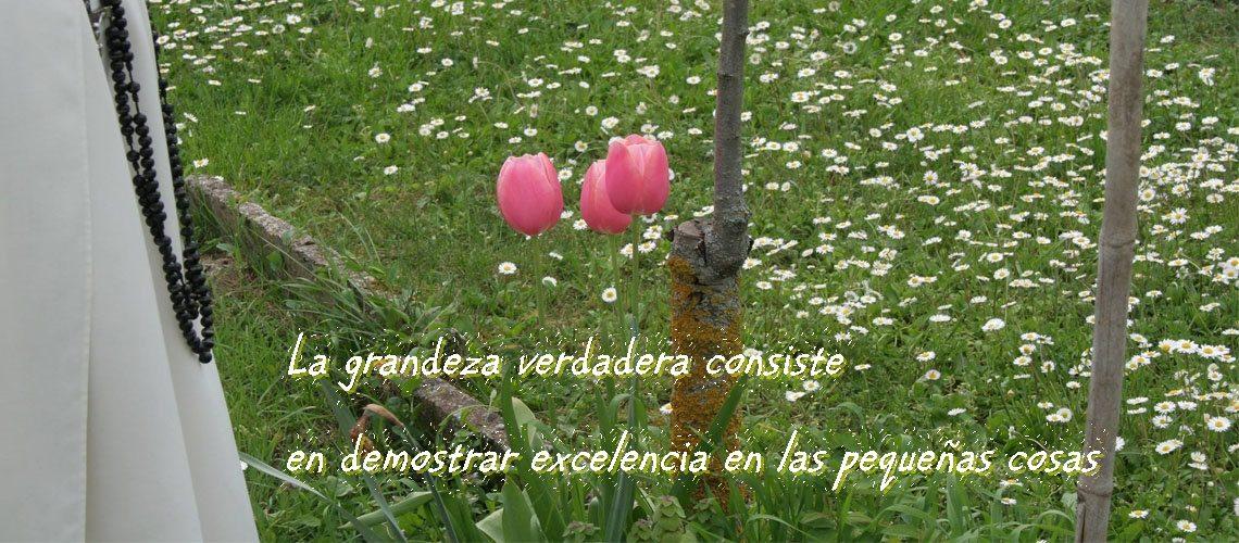monja tulipanes con letras